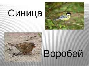 Синица Воробей