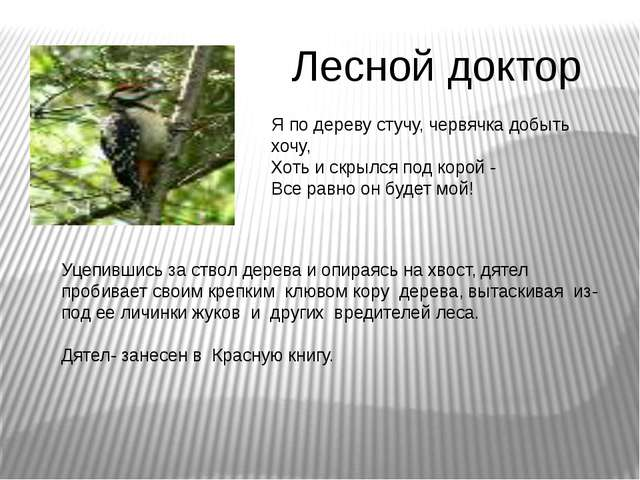 Лесной доктор Я по дереву стучу, червячка добыть хочу, Хоть и скрылся под кор...