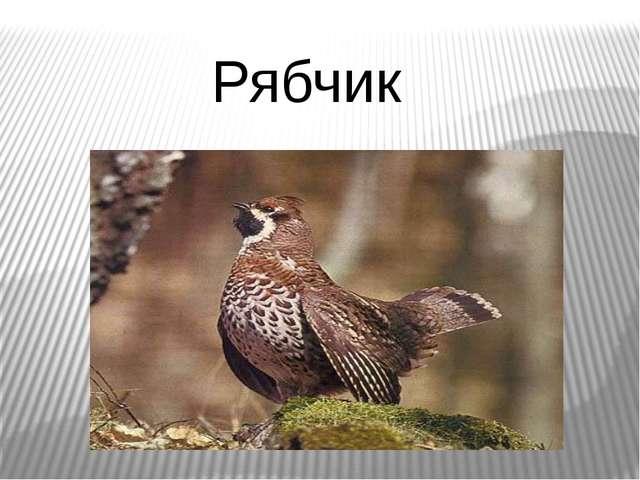 Рябчик