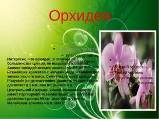 Орхидея Интересно, что орхидеи, в отличие от большинства цветов, не вызывает