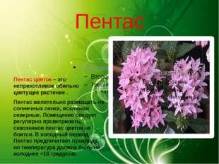 Пентас Пентас цветок – это неприхотливое обильно цветущее растение . Пентас ж