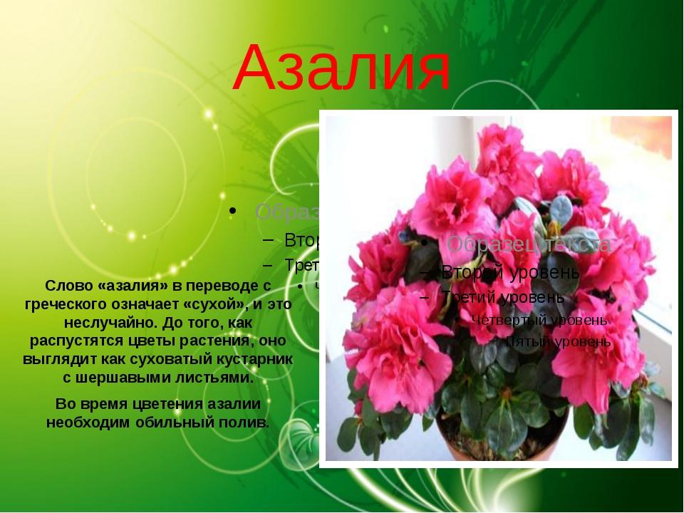 Открытка азалия с днем рождения, открытки коллеге женщине