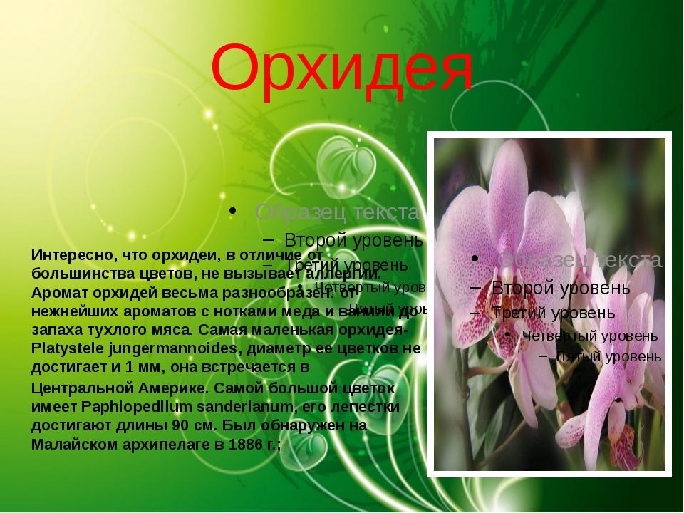 Орхидея Интересно, что орхидеи, в отличие от большинства цветов, не вызывает...