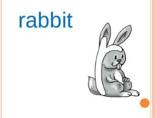 Rr rabbit