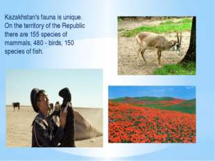 Kazakhstan's fauna is unique. On the territory of the Republic there are 155