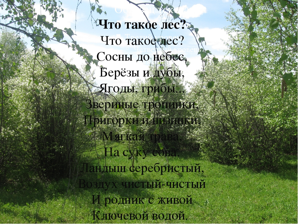 Что такое лес? Что такое лес? Сосны до небес, Берёзы и дубы, Ягоды, грибы......