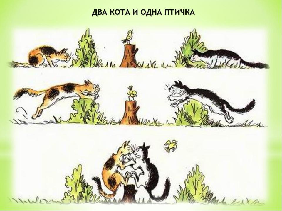 Рассказ о кошке в рисунках
