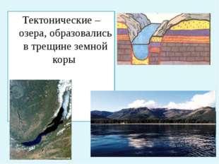 Тектонические – озера, образовались в трещине земной коры