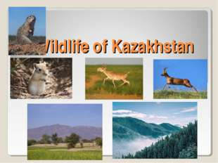 Wildlife of Kazakhstan