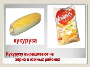 Кукурузу выращивают на зерно в южных районах