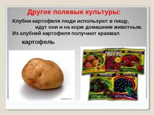 Клубни картофеля люди используют в пищу, идут они и на корм домашним животным
