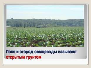 Поле и огород овощеводы называют открытым грунтом