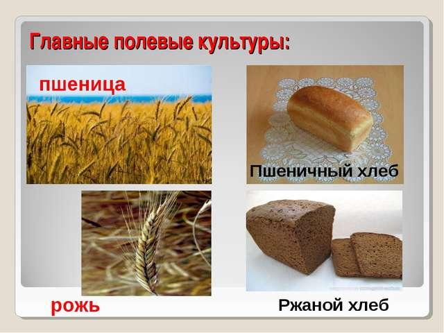 Главные полевые культуры: пшеница рожь Пшеничный хлеб Ржаной хлеб