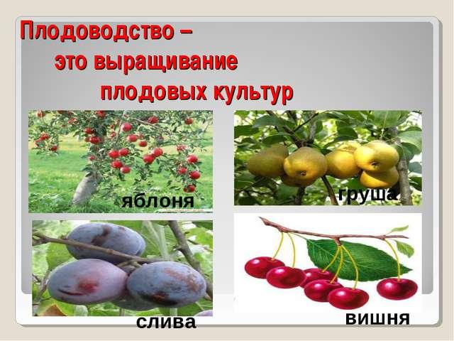 Плодоводство – это выращивание плодовых культур яблоня слива груша вишня