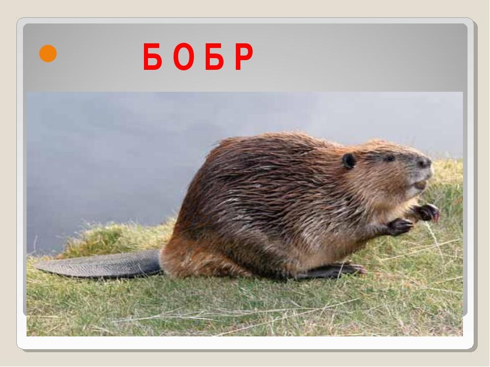 Б О Б Р