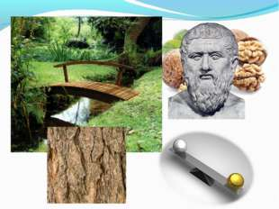 Ядра грецкого ореха совсем не случайно внешне напоминают модель человеческого