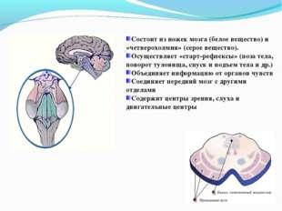 Состоит из ножек мозга (белое вещество) и «четверохолмия» (серое вещество). О