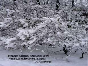 В белом пламени клонится куст Ледяных ослепительных роз. А. Ахматова