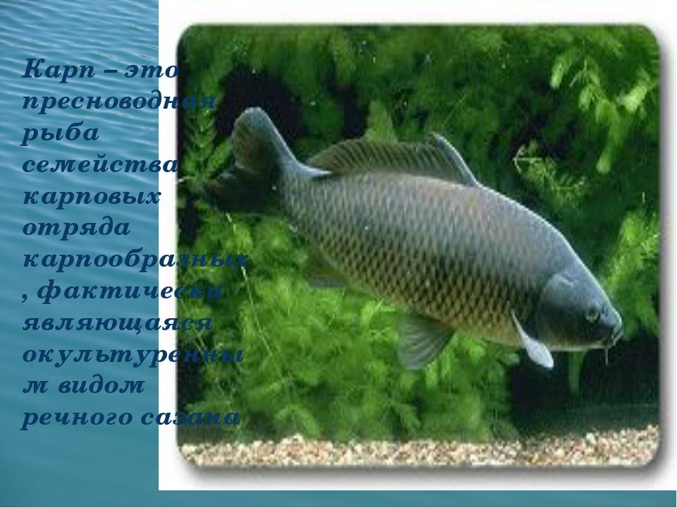 Карп – это пресноводная рыба семейства карповых отряда карпообразных, фактич...