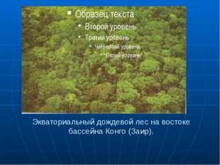 Экваториальный дождевой лес на востоке бассейна Конго (Заир).