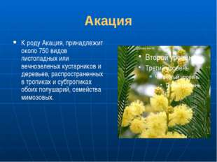 Акация К роду Акация, принадлежит около 750 видов листопадных или вечнозелены