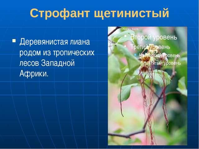 Строфант щетинистый Деревянистая лиана родом из тропических лесов Западной Аф...