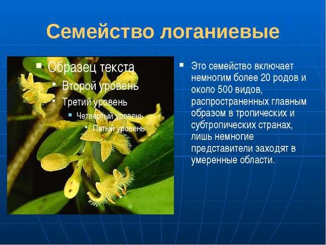 Семейство логаниевые Это семейство включает немногим более 20 родов и около 5...