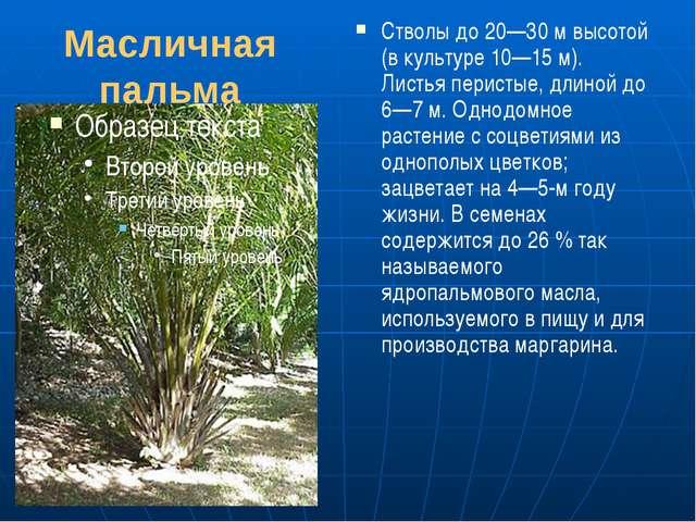 Масличная пальма Стволы до 20—30м высотой (в культуре 10—15 м). Листья перис...