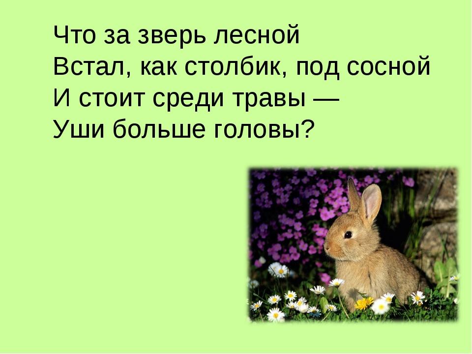 Что за зверь лесной Встал, как столбик, под сосной И стоит среди травы — Уши...
