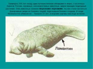 Примерно 250 лет назад один путешественник обнаружил в море, у восточных бере
