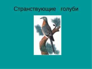 Странствующие голуби
