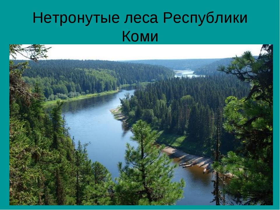 Нетронутые леса Республики Коми