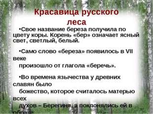 Красавица русского леса Свое название береза получила по цвету коры. Корень «