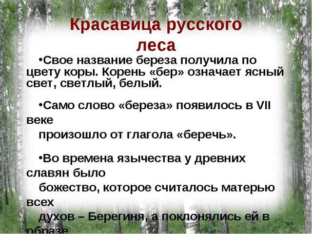 Красавица русского леса Свое название береза получила по цвету коры. Корень «...
