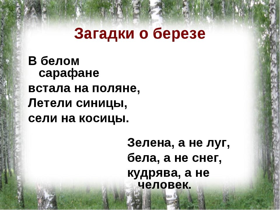 Загадки о березе В белом сарафане встала на поляне, Летели синицы, сели на ко...