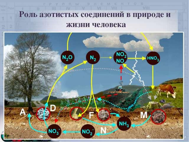 Роль азотистых соединений в природе и жизни человека
