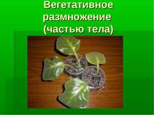 Вегетативное размножение (частью тела)