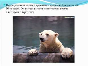 После удачной охоты в организме медведя образуется до 50 кг жира. Он питает и