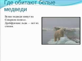 Где обитают белые медведи Белые медведи живут на Северном полюсе. Дрейфующие