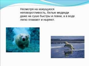 Несмотря на кажущуюся неповоротливость, белые медведи даже на суше быстры и л