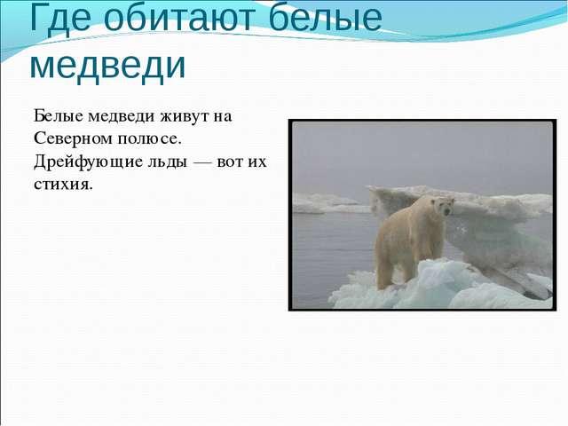 Где обитают белые медведи Белые медведи живут на Северном полюсе. Дрейфующие...