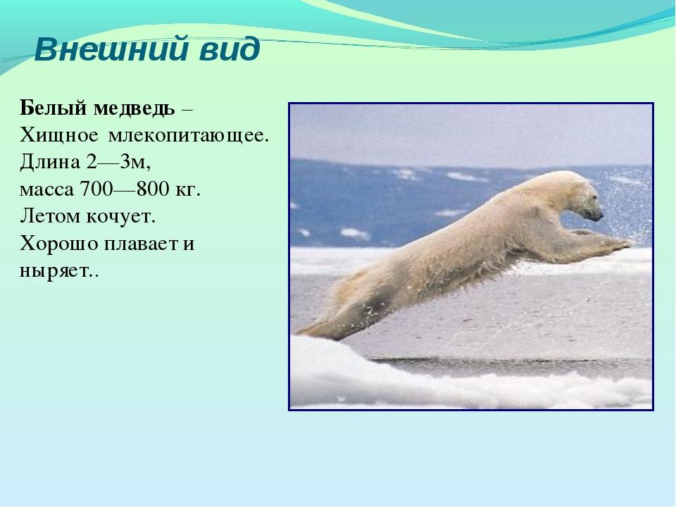 Внешний вид Белый медведь – Хищное млекопитающее. Длина2—3м, масса 700—800к...