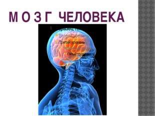 М О З Г ЧЕЛОВЕКА