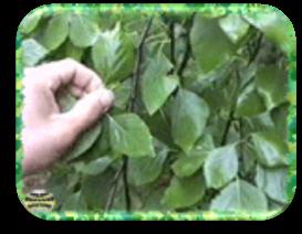 http://www.ecosystema.ru/04materials/video/Summer-img/su10-3.gif