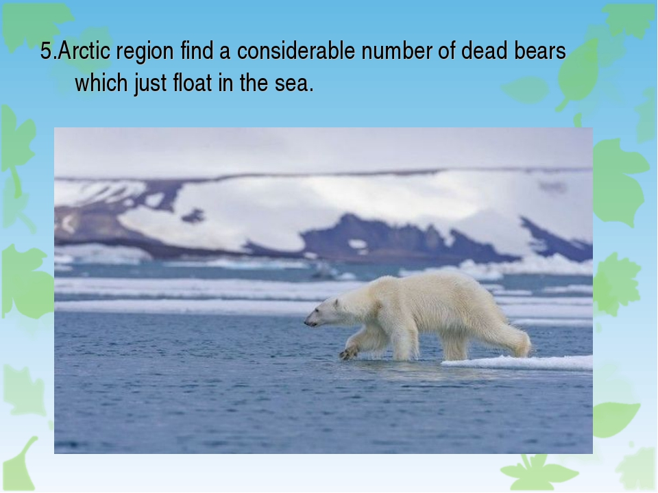5.Arctic region find a considerable number of dead bears which just float in...