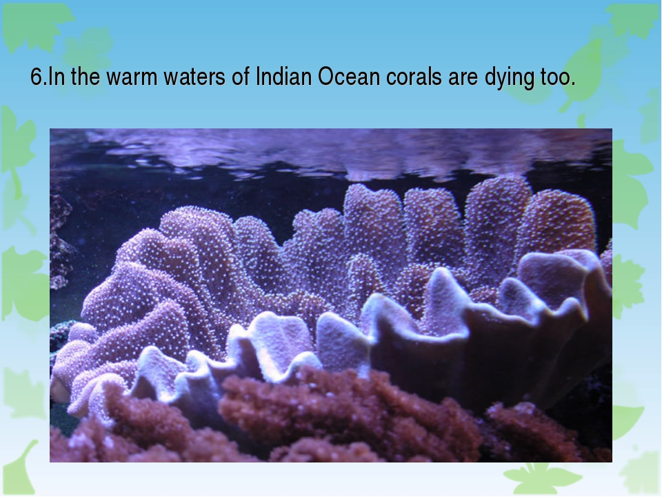 6.In the warm waters of Indian Ocean corals are dying too.