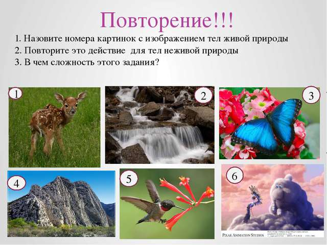 Повторение!!! 1. Назовите номера картинок с изображением тел живой природы 2...