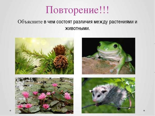 Повторение!!! Объясните в чем состоят различия между растениями и животными.
