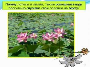 Почему лотосы и лилии, такие роскошные в воде, бессильно опускают свои головк