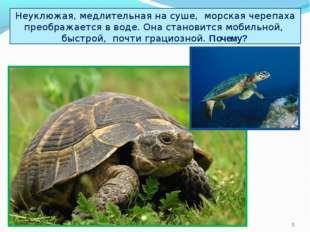 Неуклюжая, медлительная на суше, морская черепаха преображается в воде. Она с
